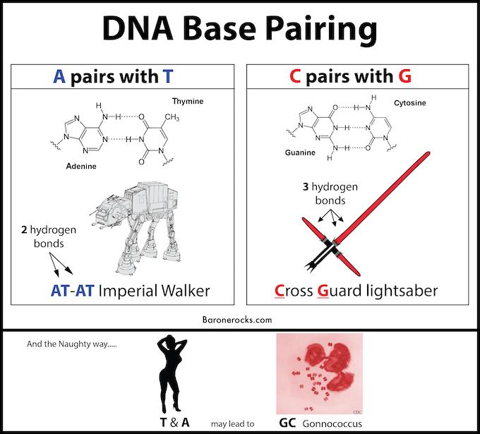 nucleotide base pair diagram 2 illustration of wiring