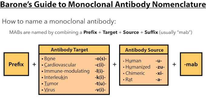 monoclonal antibodies research paper For general research applications, however, the advantages of polyclonal antibodies typically outweigh the few advantages that monoclonal antibodies provide with affinity purification of serum against small antigen targets, the advantages of polyclonal antibodies are further extended.