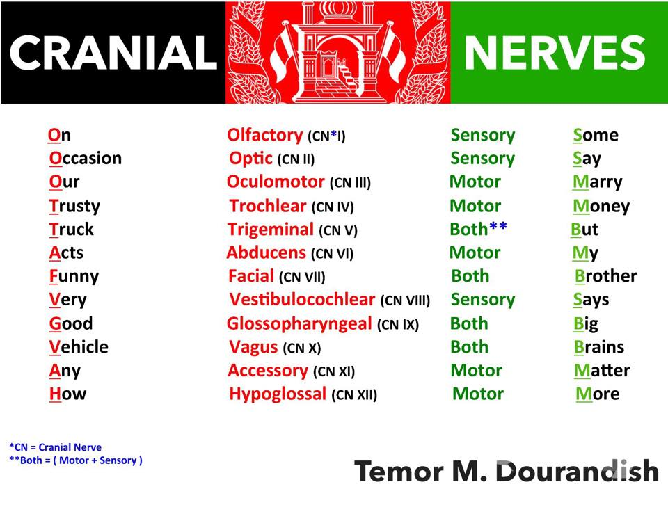 anatomy mnemonics blocks 1 4 x Please follow and like us: 1 muscle spindle: origin of primary vs secondary endings 1from 1, 2 from 2: primary ending is from group ia secondary ending from group ii.